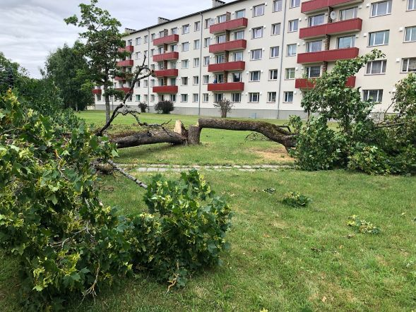 dbe1df57e49 W3 uudised - FOTOD | Marutuul murdis Järvamaal hulgi puid