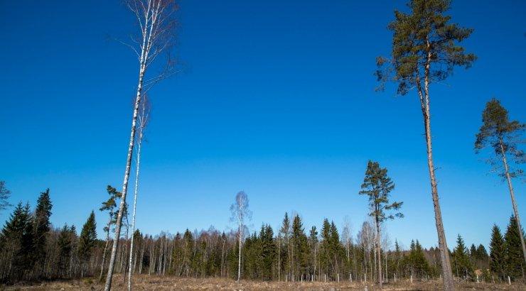 Цены способствуют объемам вырубки леса
