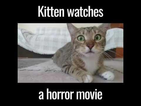 VIDEO: Sa üllatud, kui näed, kui emotsionaalselt kassipoeg õudusfilmi vaatab