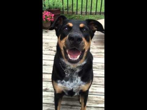 Päeva parim VIDEO: Andekas koer oskab sosistada ja teeb su tuju automaatselt heaks