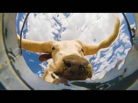Äge VIDEO: Mees peitis veeämbrisse kaamera, et näha, kes janu kustutama tulevad ja tulemus on ülivinge