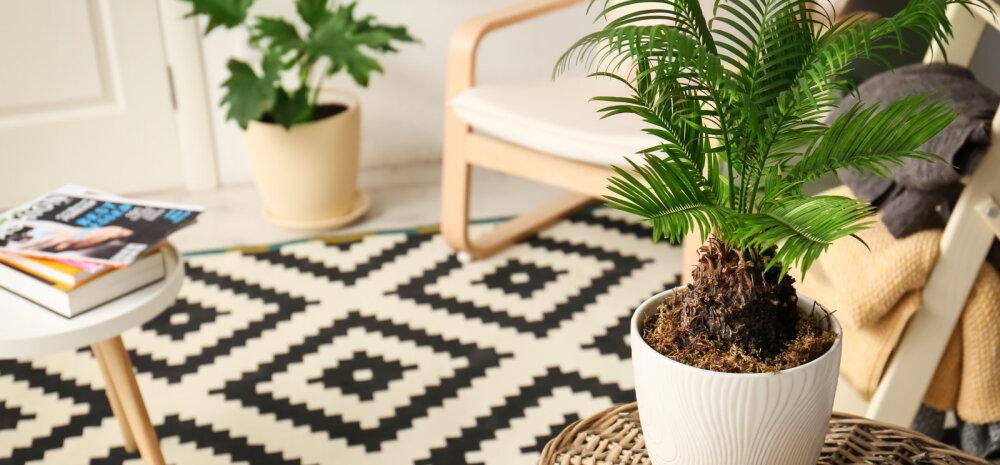 Растения-талисманы, защищающие дом от всех невзгод