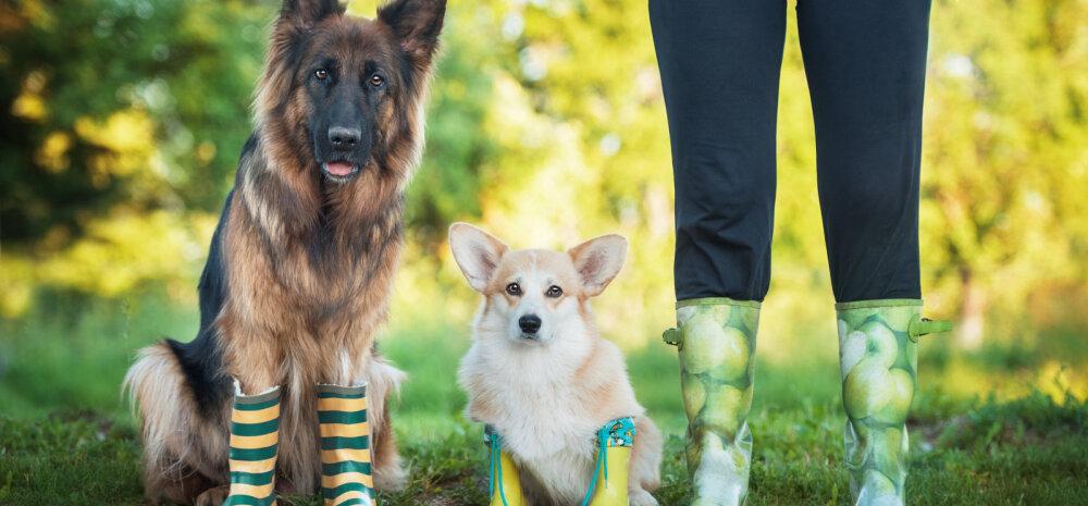 Vihmase ja sopase ilma ABC: kuidas vihmasel ajal koera eest hoolitseda?