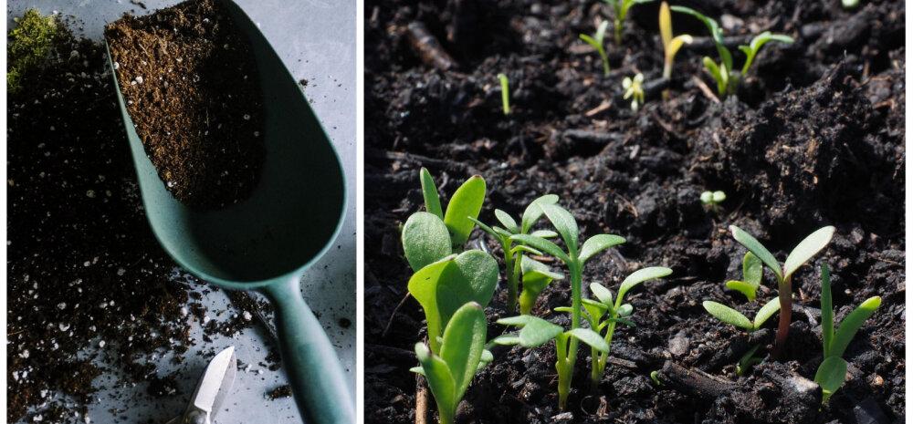 НА ЗАМЕТКУ | Что посадить под зиму в саду и огороде?