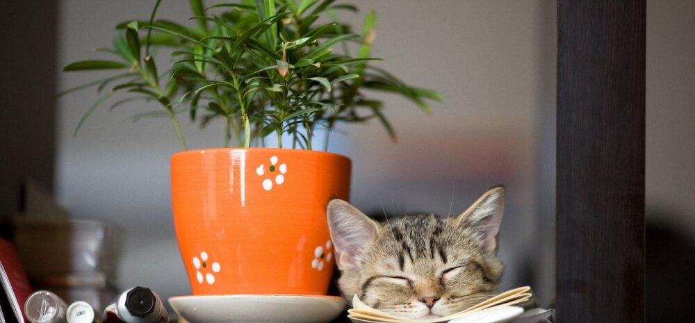 А вы знаете, какие комнатные растения приносят в дом радость?