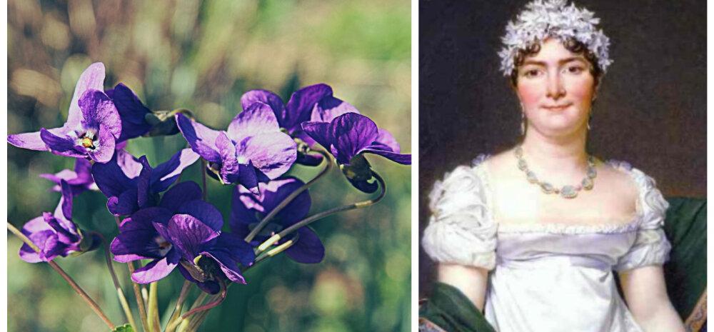 Трагическая легенда о фиалке: цветок императрицы Жозефины