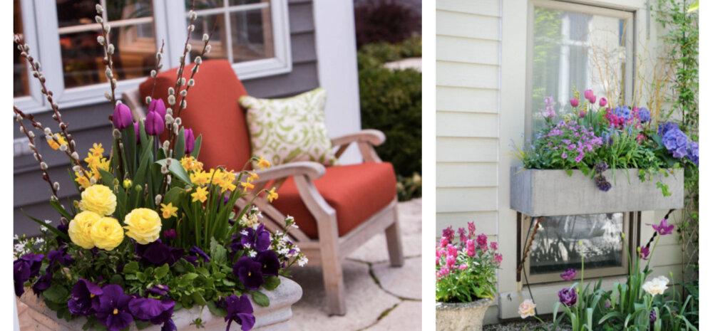 Kuidas luua varakevadist lilleilu istutuspottidesse? Vaata ideid!