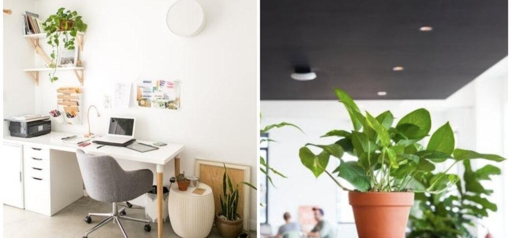 НА ЗАМЕТКУ | Самые лучшие растения для офиса
