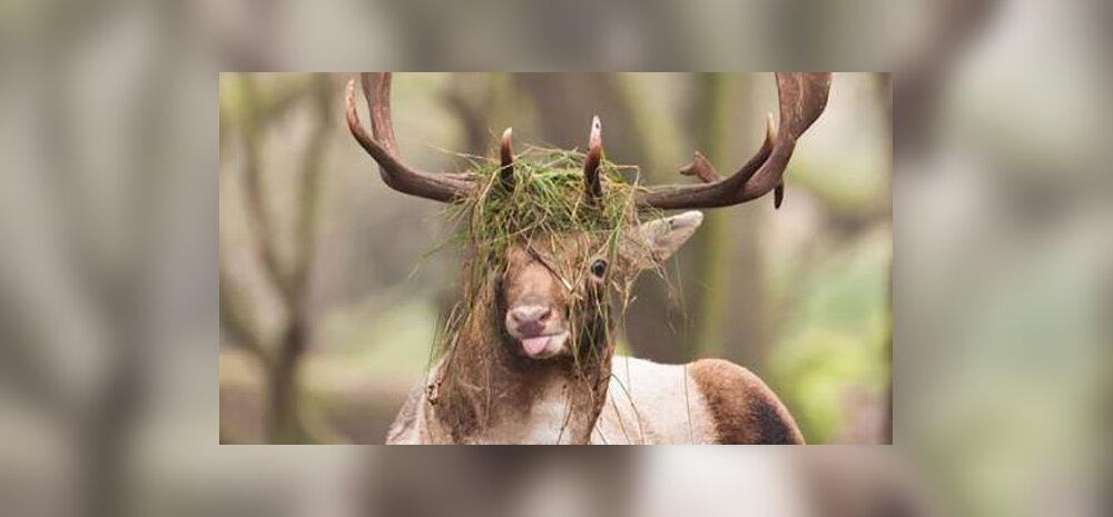 FOTOD   Naerupisar garanteeritud! Need on loomariigi kõige ebafotogeenilisemad olendid