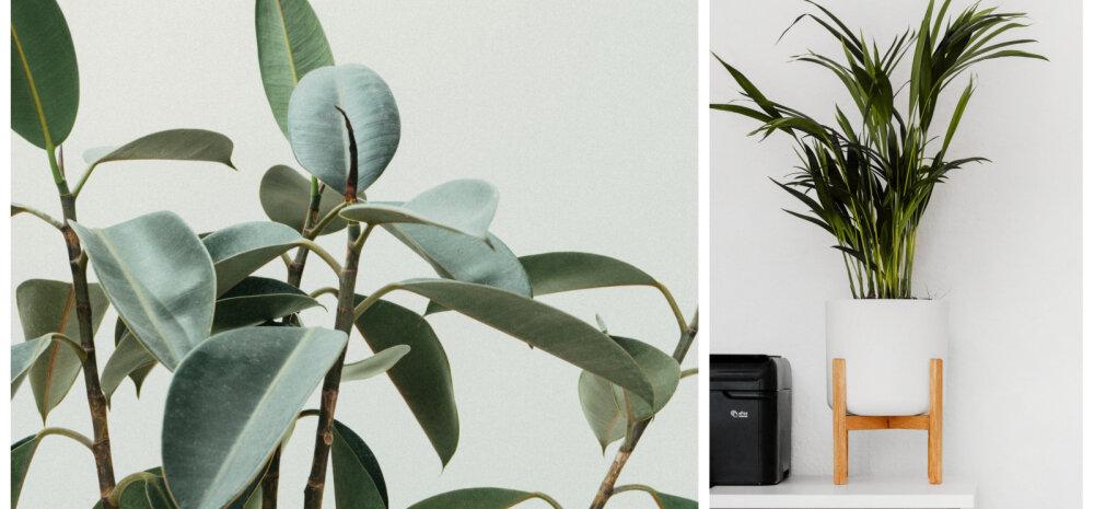 Viis taime, mis aitavad toad jahedana hoida