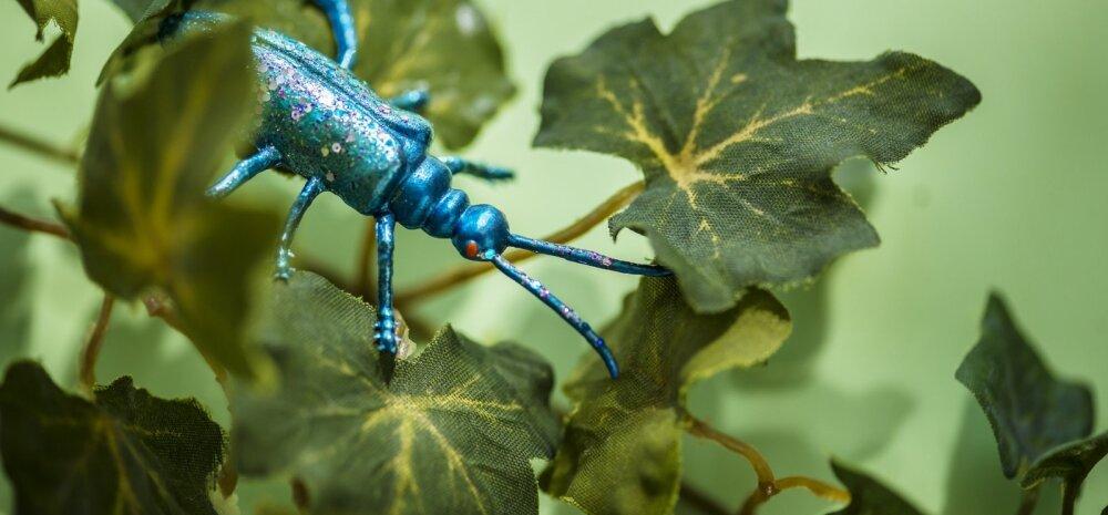 Незваные гости: 9 насекомых, которые живут вместе с нами в доме
