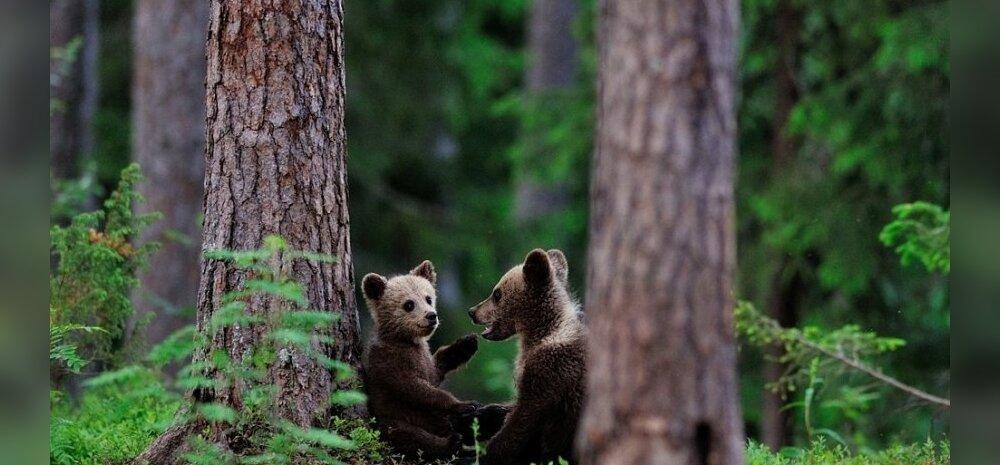 """Erik Mandre loodusfotod raamatust """"Silmside loodusega"""""""