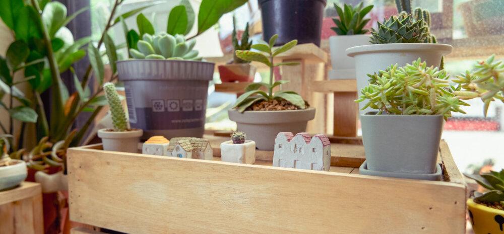 Зеленая бригада: 9 лучших растений для каждой комнаты и 3 для балкона