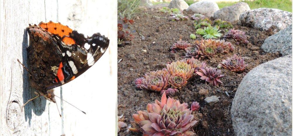 AIAHOOLIKU BLOGI | Plaanid, mõtted ja kõhklused, kuidas kujundada aianurk