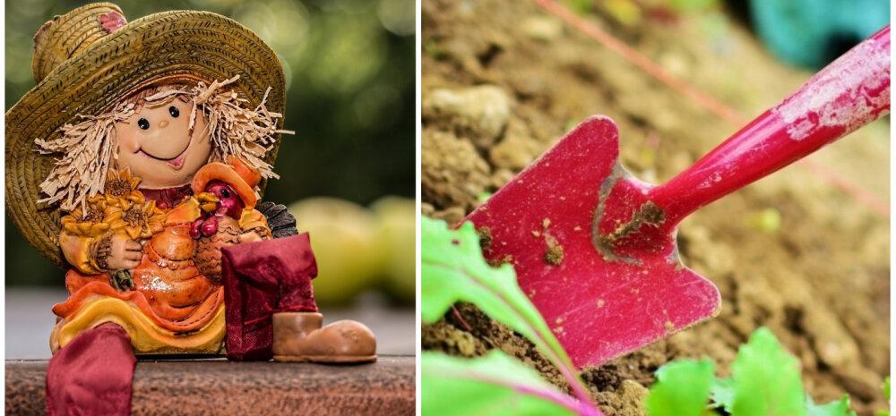 НА ЗАМЕТКУ | Работы в саду и огороде в сентябре