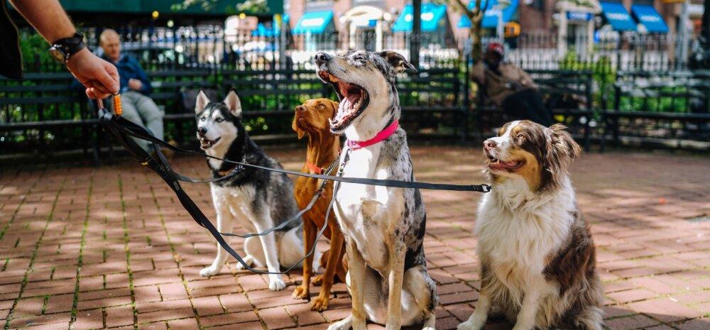 Põnev! Milline koeratõug oli sinu sünniaastal kõige populaarsem?