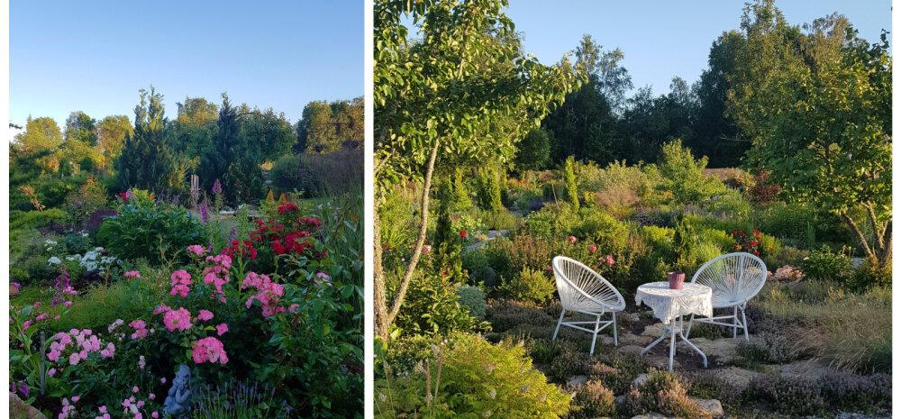 Saaremaa ja Muhu kaunid aiad kutsuvad külla