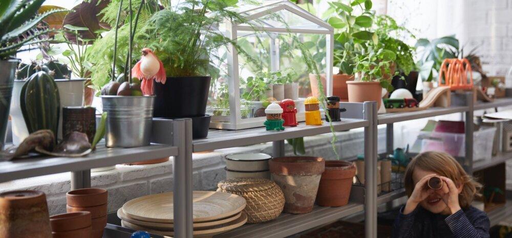 Полезные решения по разумной цене! 10 простых шагов к более экологичной жизни дома