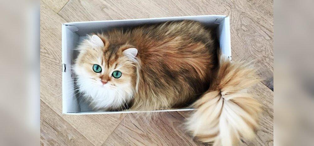 Erilised miisud: 7 kassi, kes on kuulsamad kui sina, tema ja Leonardo Dicaprio