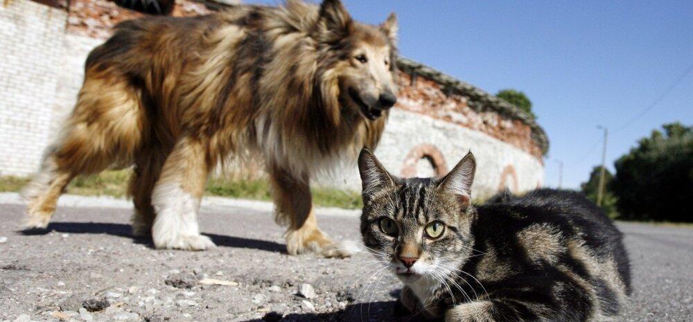 Teaduslikult tõestatud: kes armastavad inimesi rohkem, koerad või kassid?