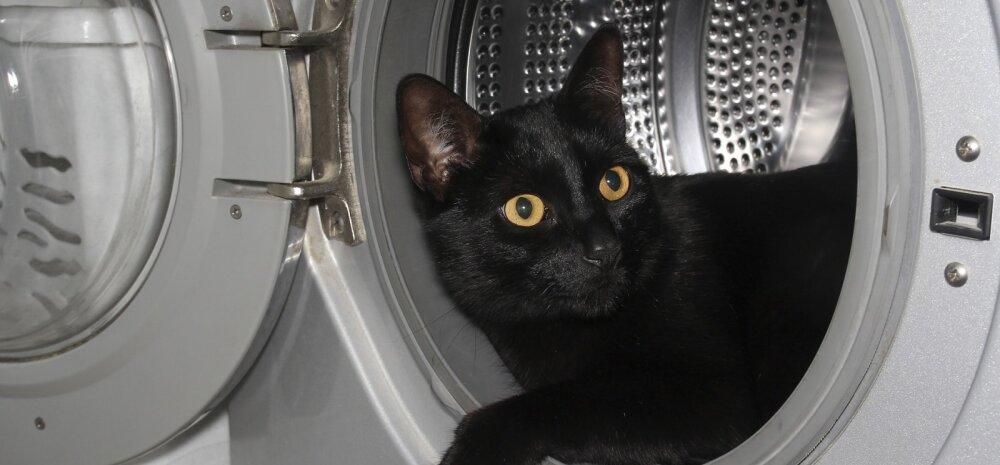 Дверцу стиральной машины нельзя держать закрытой, даже если она пустая. Почему?