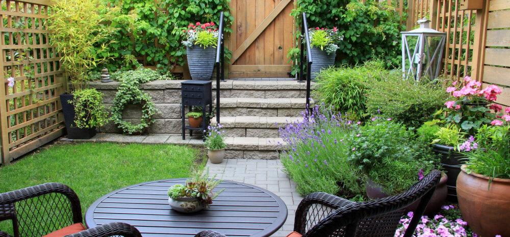 Häid nippe, kuidas kujundada kaunis ja praktiline õueala