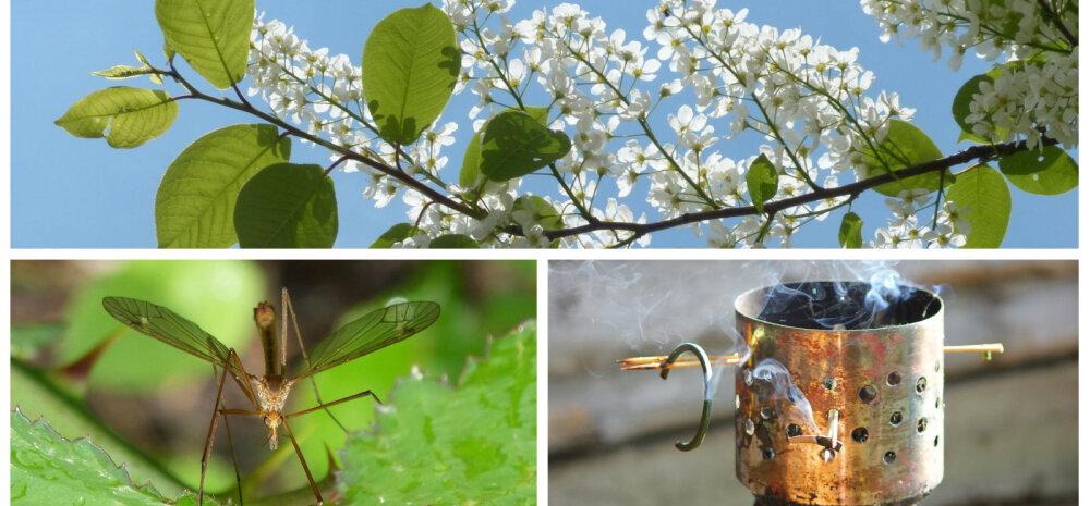 Экологические способы защиты от комаров