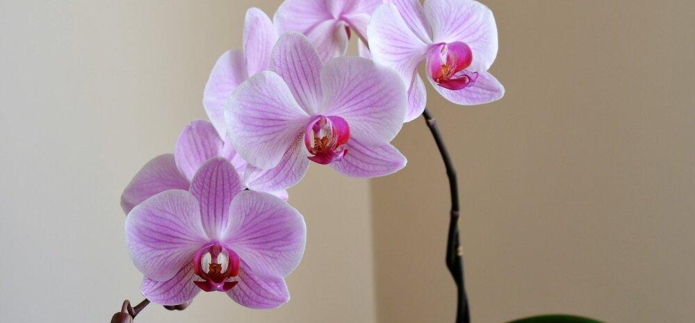 Орхидеи, алоэ или фикусы? Что комнатные растения могут рассказать о своих хозяевах