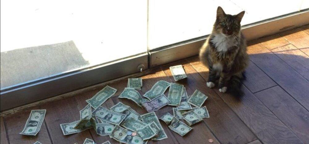 Kentsakas lugu   kontorikass, kes armastab nii väga raha, et varastab seda lausa võõrastelt