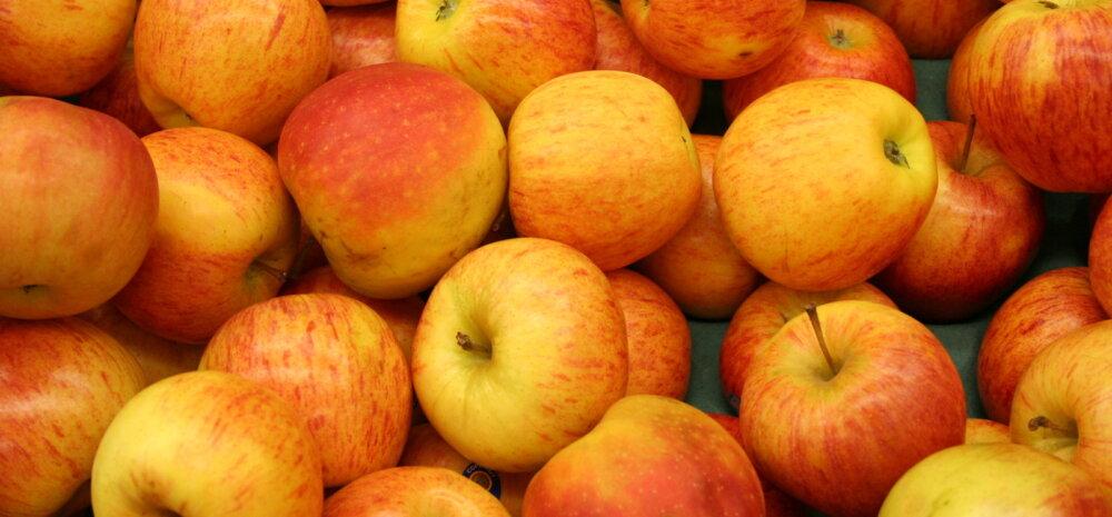 RETSEPT | Hõrk ja marjane õunakook, mis on kõhule kerge