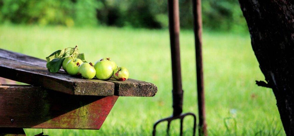 ИДЕИ │ Способы избавления от опавших яблок