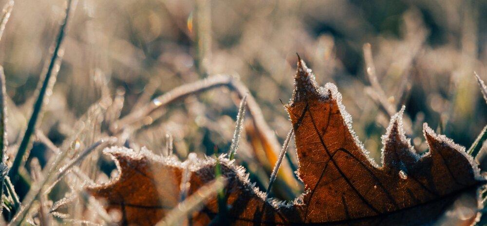 Ilm soosib aias askeldamist — mida võiks veel novembris ära teha