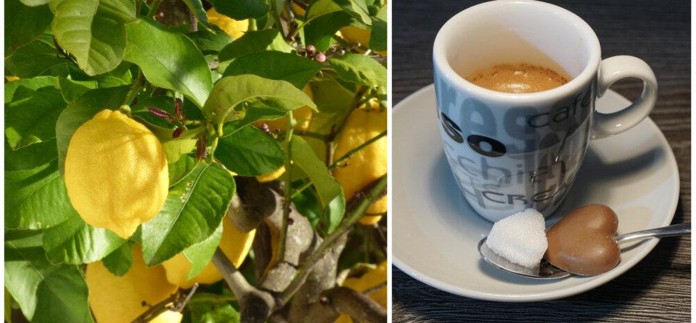 """ИДЕЯ │ Как вырастить дома чай с лимоном и кофе с """"сахаром""""?"""