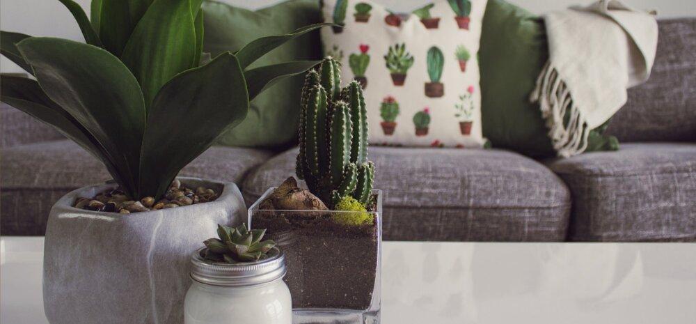 Могут навредить: комнатные растения, способные приносить в дом несчастье