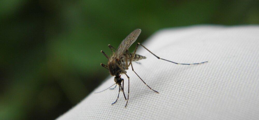 Что случилось бы, если бы все комары в одночасье исчезли?