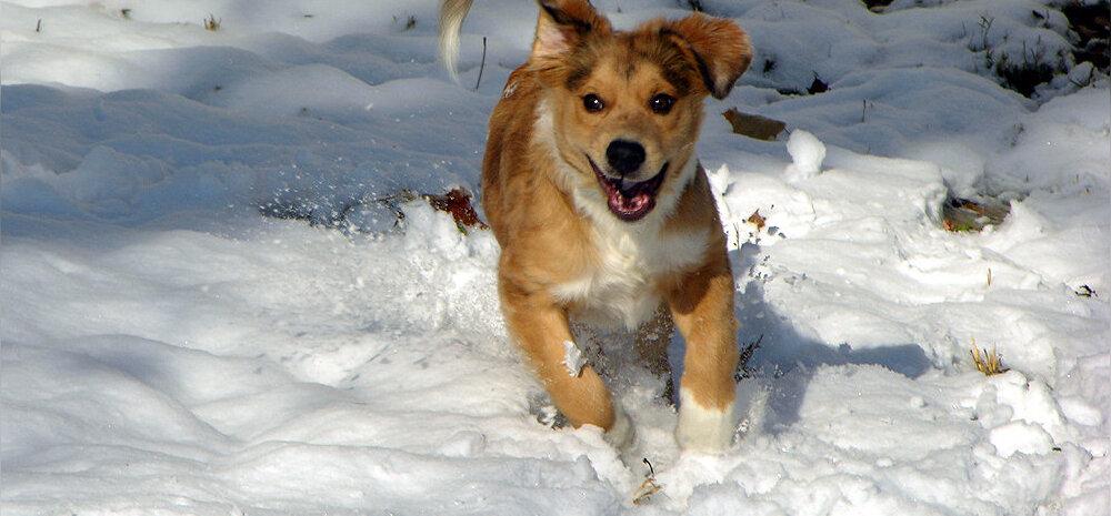 Kati Orgu soovitab: treeni õues ka talvel — sooritused lumes kulutavad rohkem kaloreid