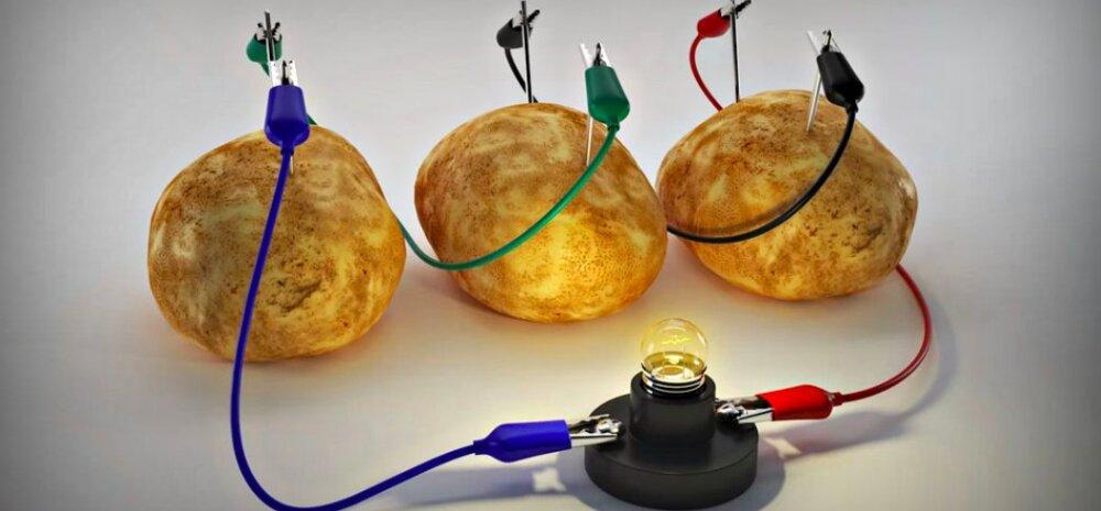 ВИДЕО | Сколько электричества может производить картошка