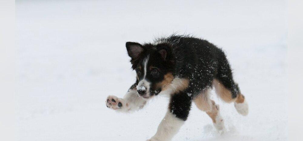 TOP 10: Need on Eesti kõige populaarsemad koeranimed