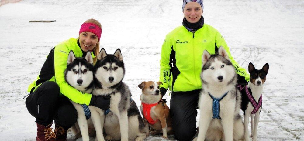 Vasakult Kadi Keskpalu koertega Sparky ja Lisa ning Kairi Zvirik koertega Tiit, Nora ja Kali.