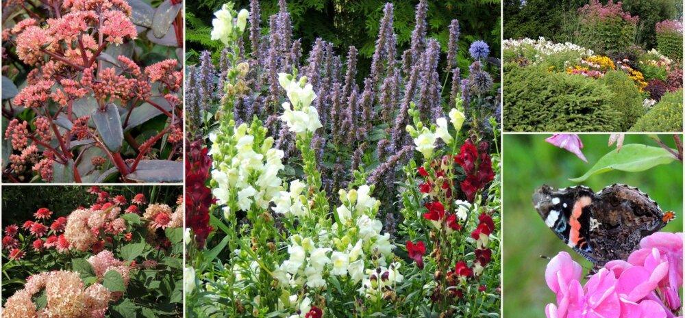 AIAHOOLIKU BLOGI | Nõrga talu imelised peenrad ja pisut ka oma aiast