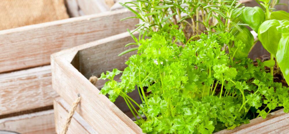 TEE ISE | Puidust kast, kus lilli ja juurvilju kasvatada