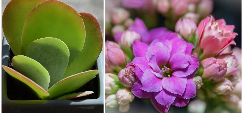 Хватит одной веточки! Пять красивых растений, которые легко можно вырастить дома