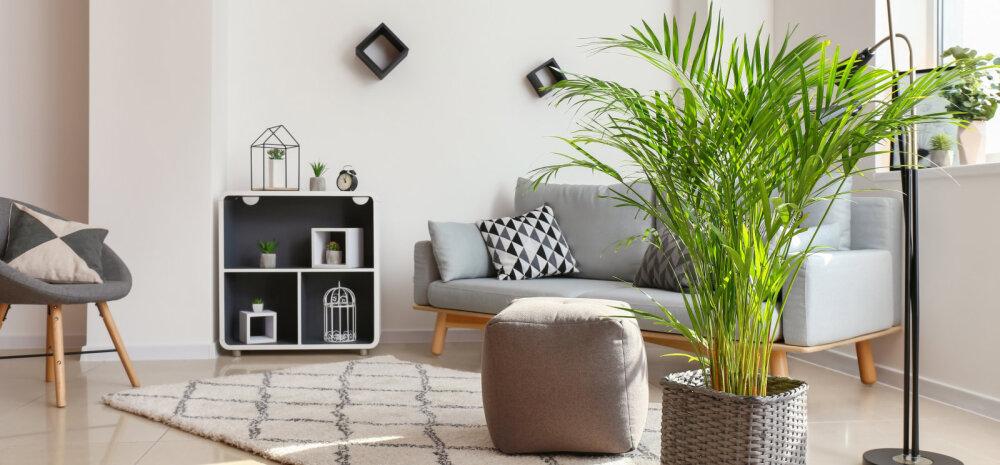 """""""Rohelisem"""" uus aasta — 25 väikest nippi, kuidas muuta oma kodu keskkonnasõbralikumaks"""