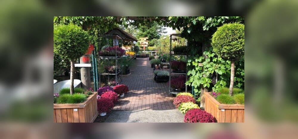 Kaasaegsed taimelahendused koduaeda ehk alternatiivlahendused elupuuhekile