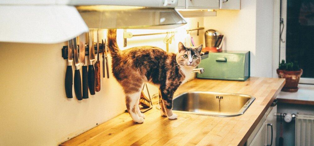В тесноте, да не в обиде: как поместить все на маленькой кухне