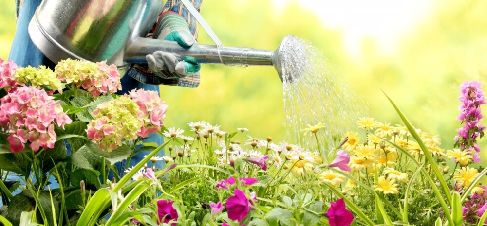НА ЗАМЕТКУ | Основные ошибки при поливе огорода