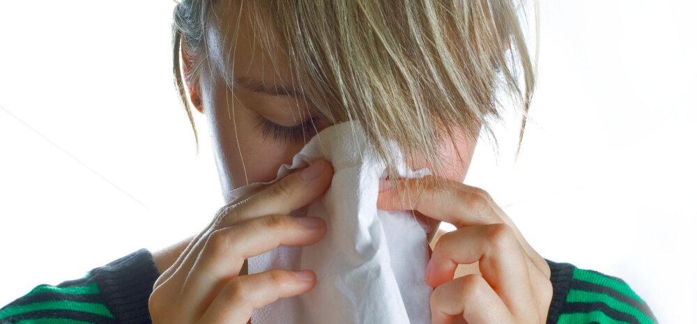 Hoiatus allergikutele: tugeva õietolmuga päevadel on südameinfarkti risk kõrgem
