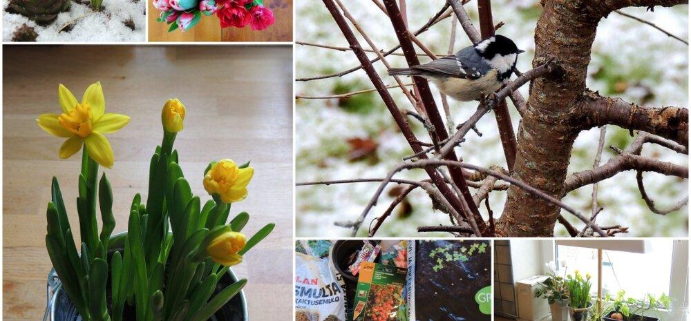 AIAHOOLIKU BLOGI | Lõpuks ometi on kevad käes ja näpud võib mulda pista!
