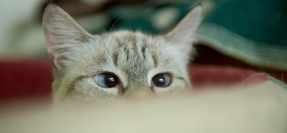 Viimsi kassid Kasside turvakodus