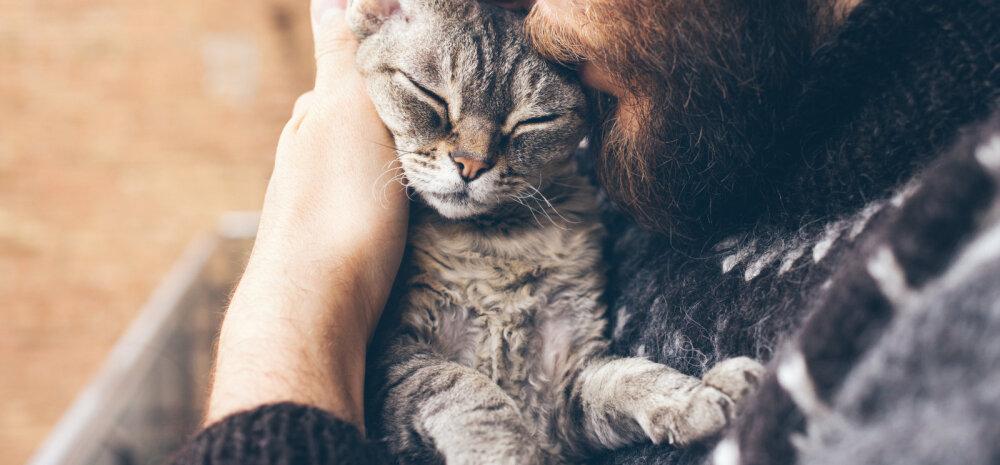 Kas päästetud kass saab aru, et just sina andsid talle elus uue võimaluse?
